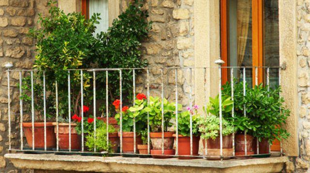 Conseils pour fleurir votre balcon citadin
