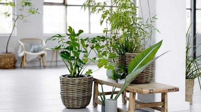 Que vous apportent les plantes vertes ?